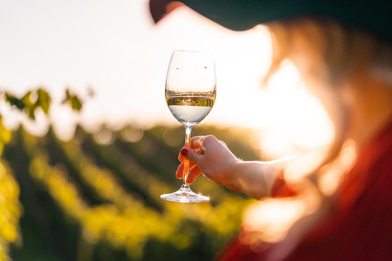 Фотографии боке Вино рука бокал Размытый фон Руки Бокалы