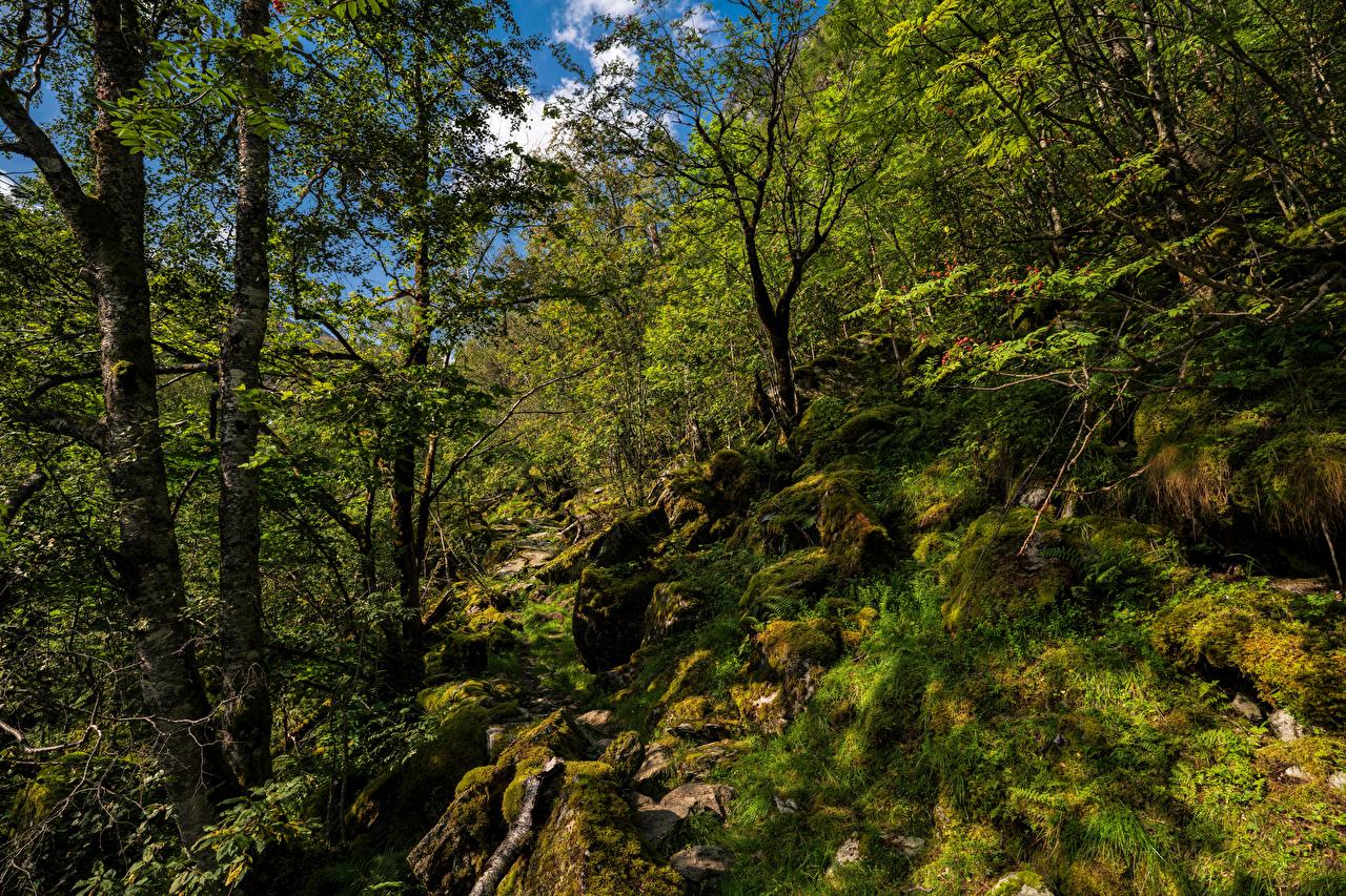 Фото Норвегия Hardangerfjord Природа Леса мхом Камень деревьев лес Мох мха Камни дерево дерева Деревья
