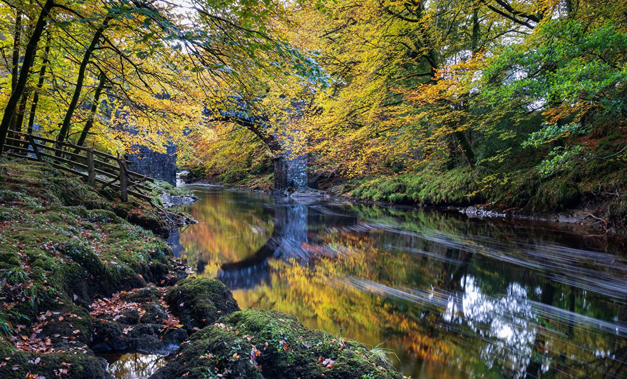 Фотографии Англия Dartmoor Осень Природа Парки Мох речка осенние Реки