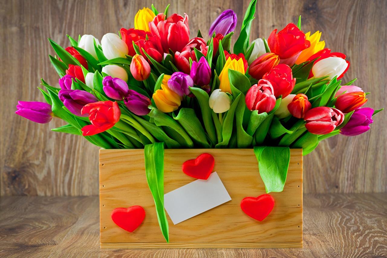 Фото Разноцветные Тюльпаны цветок Цветы