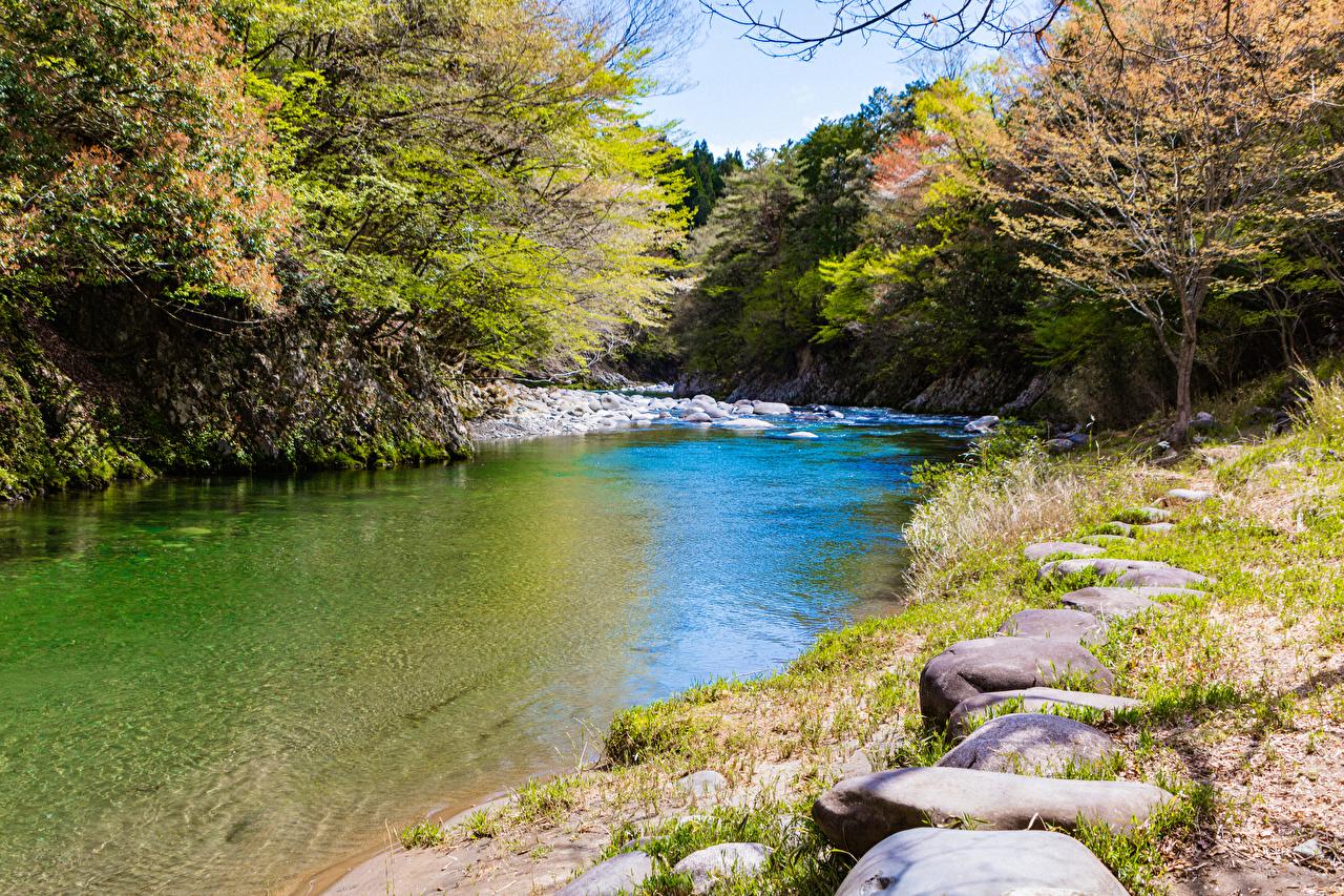 Фотографии Киото Япония Sagano Природа Леса речка Камень лес Реки река Камни