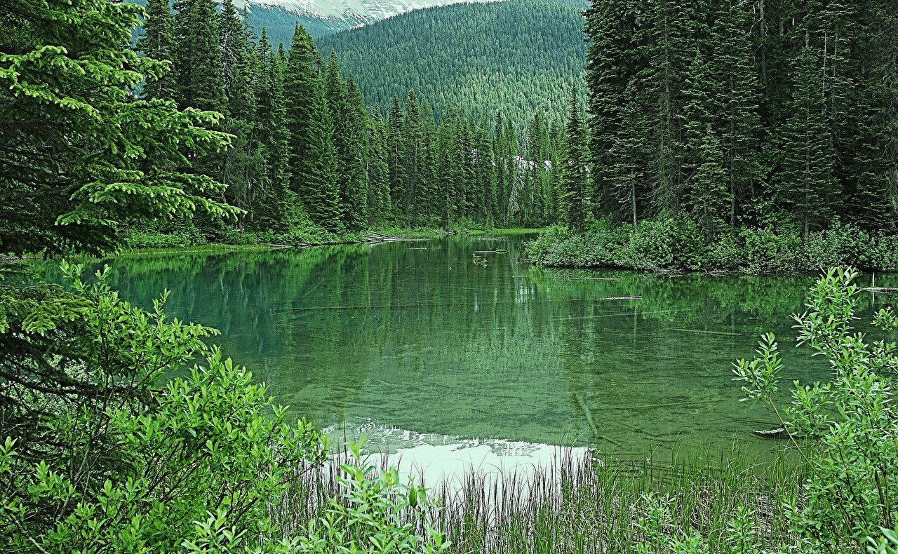 Картинки Канада Emerald Lake Природа лес Озеро Леса