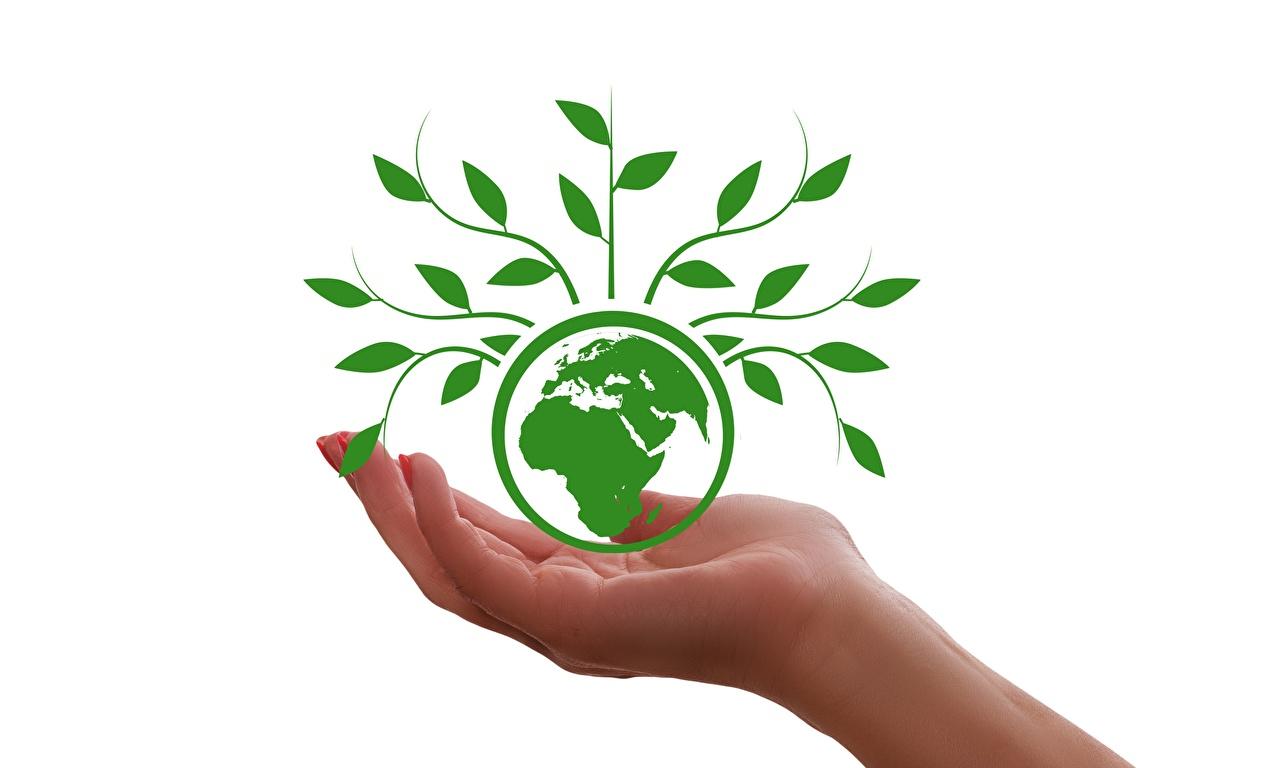 Картинки земли планета Руки Растения Белый фон Земля Планеты рука белом фоне белым фоном
