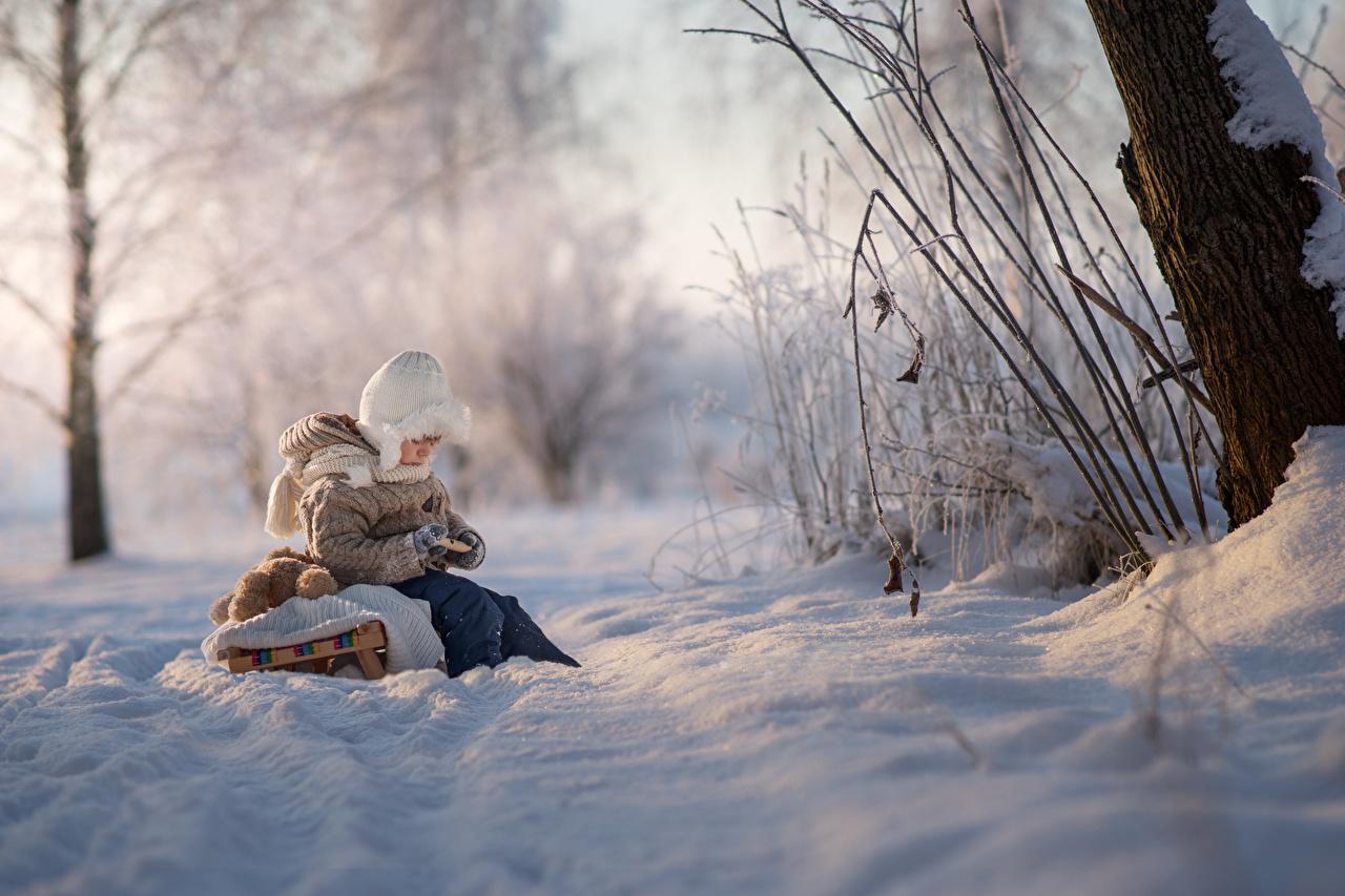 Картинки мальчик Санки боке Дети зимние Природа снега Сидит Мальчики мальчишка мальчишки Сани санях санках Размытый фон ребёнок Зима Снег снегу снеге сидя сидящие