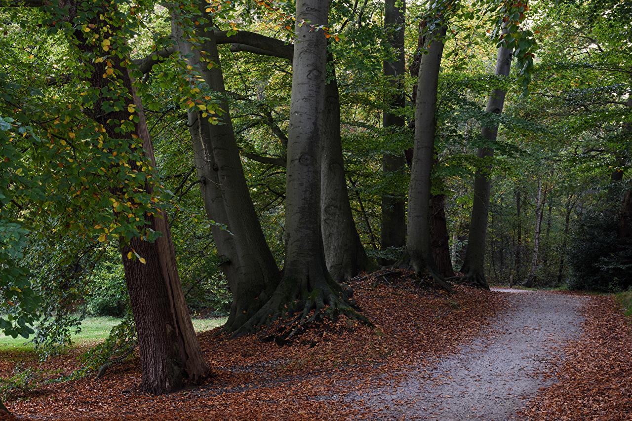 Фото Листья Нидерланды Graaveland Природа осенние Парки Деревья Листва Осень