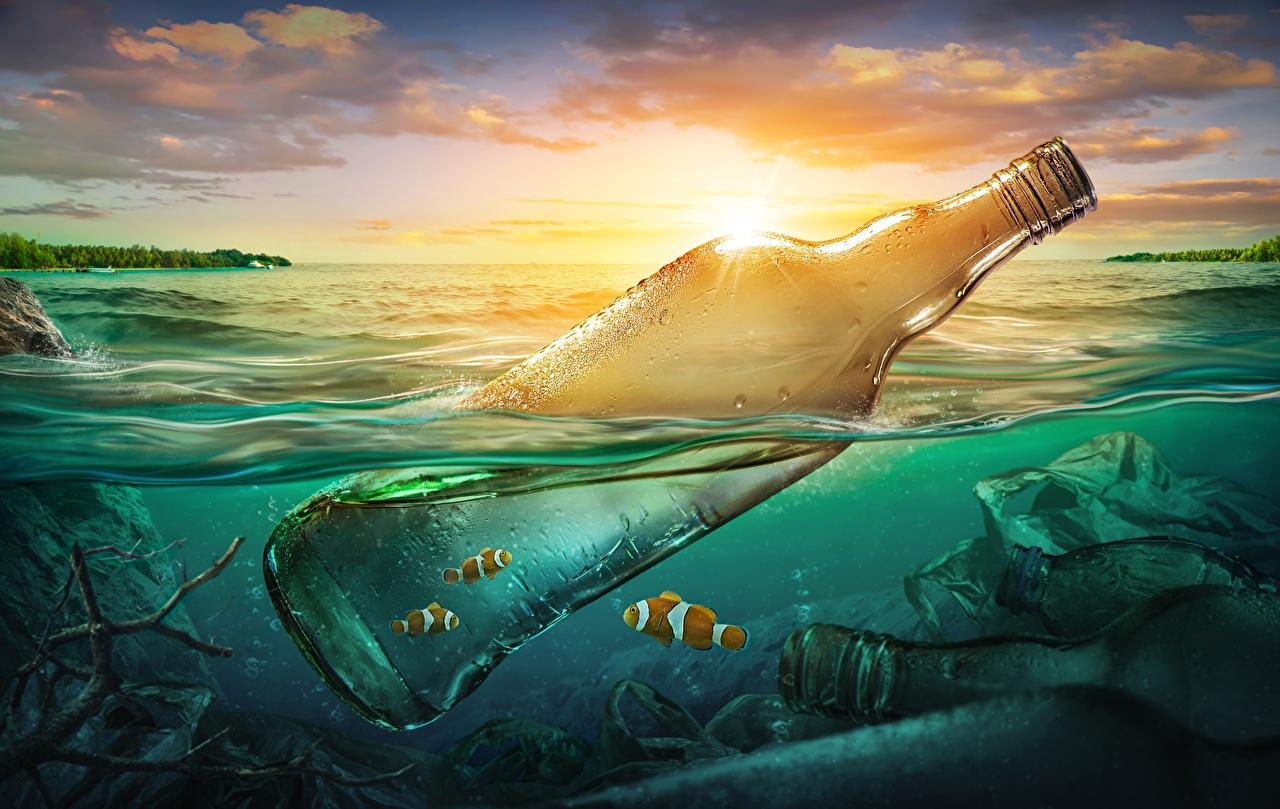 Фотография Рыбы Природа Вода Мусор бутылки воде Бутылка