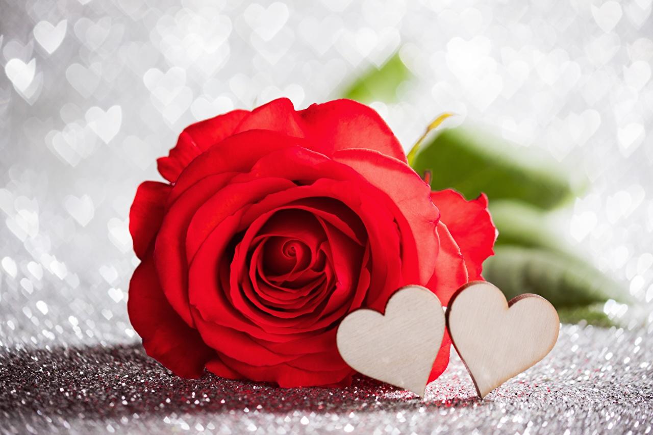Фотографии День всех влюблённых Сердце роза красная цветок День святого Валентина серце сердца сердечко Розы красных Красный красные Цветы