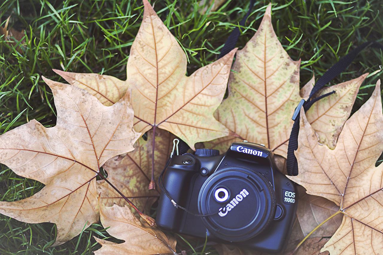 Фото Листва фотокамера canon клёновый Осень траве вблизи лист Листья Фотоаппарат Клён клёна осенние Трава Крупным планом