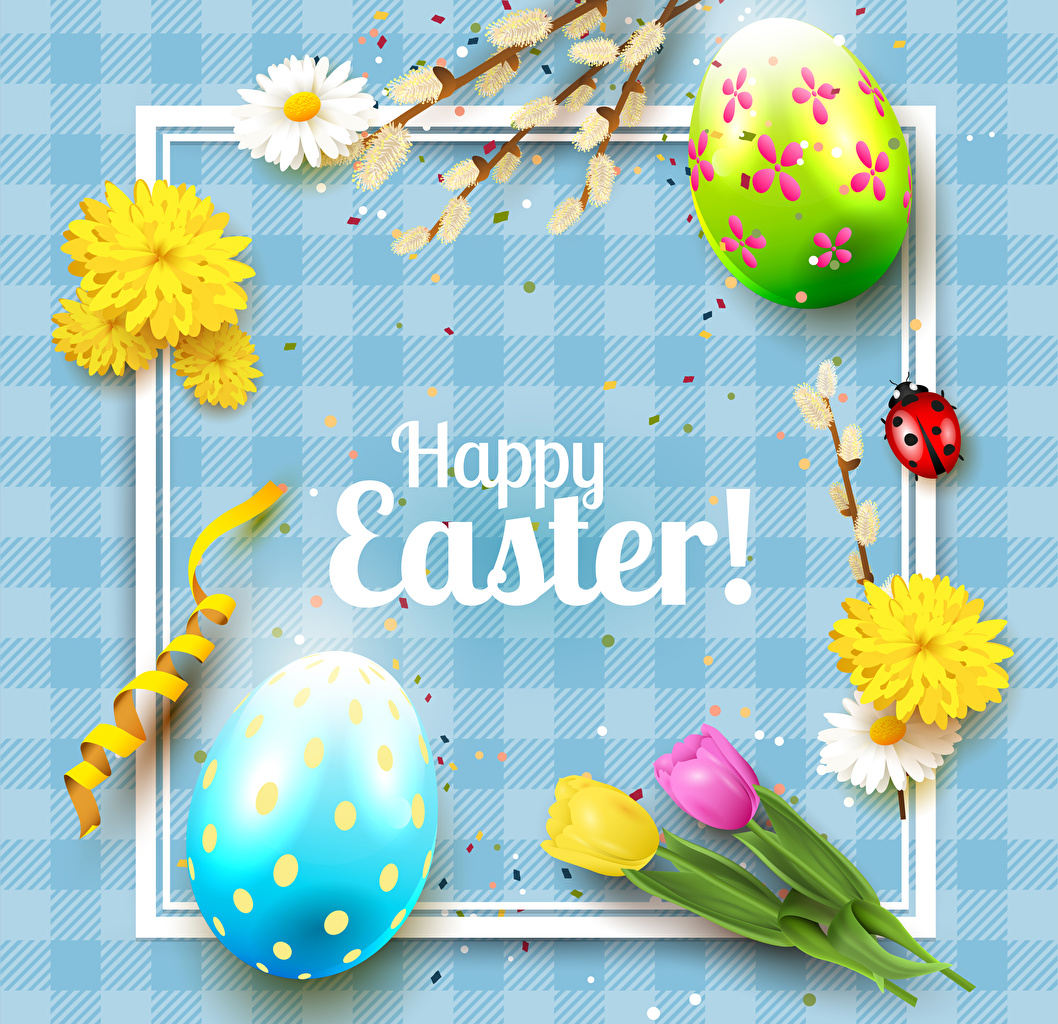 Картинки Пасха Божьи коровки Английский яиц Тюльпаны цветок Маргаритка инглийские английская яйцо Яйца яйцами тюльпан Цветы