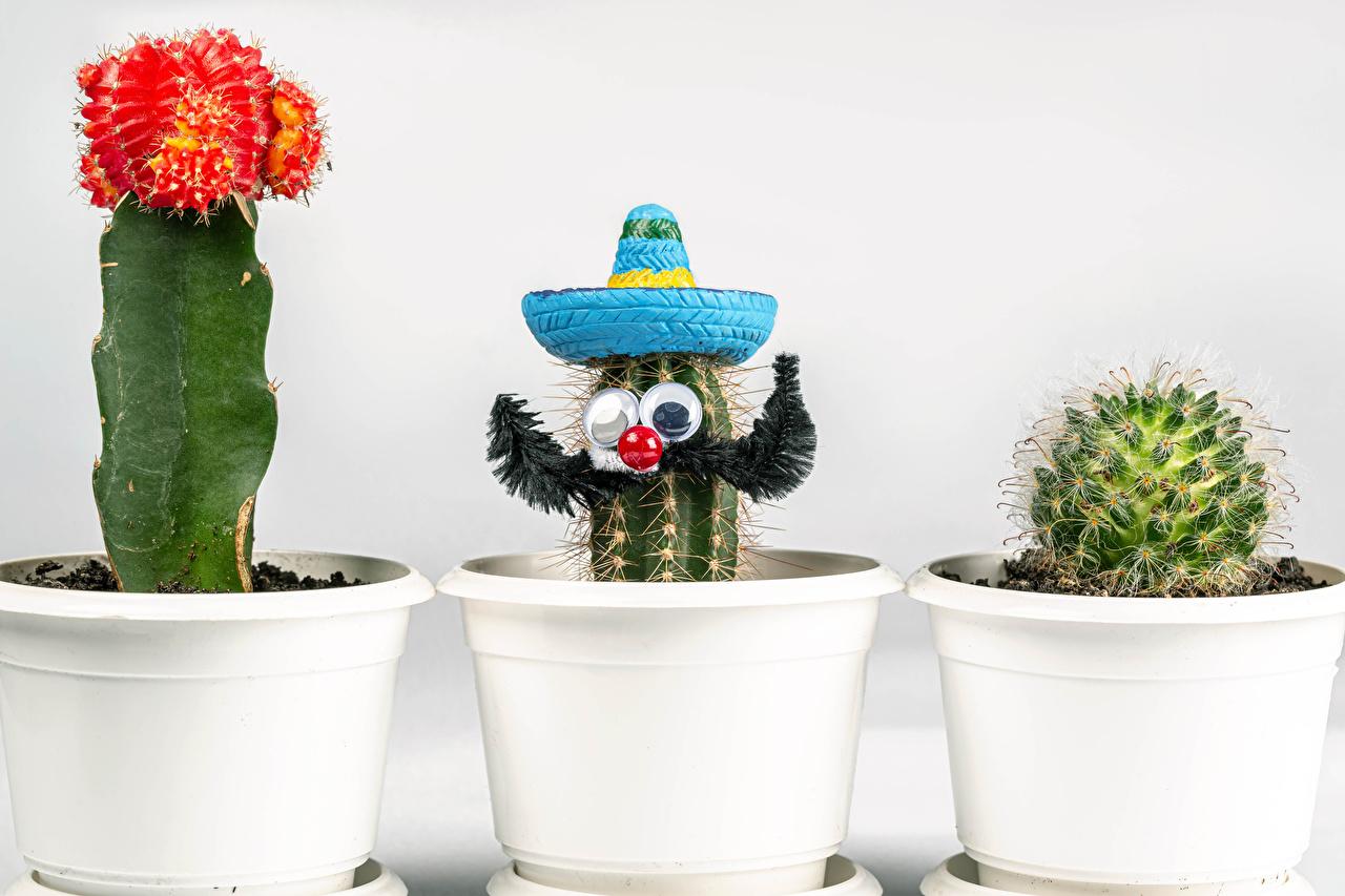 Фотографии шляпы Цветочный горшок Цветы оригинальные Трое 3 Кактусы Белый фон Шляпа шляпе цветок Креатив креативные три втроем белом фоне белым фоном