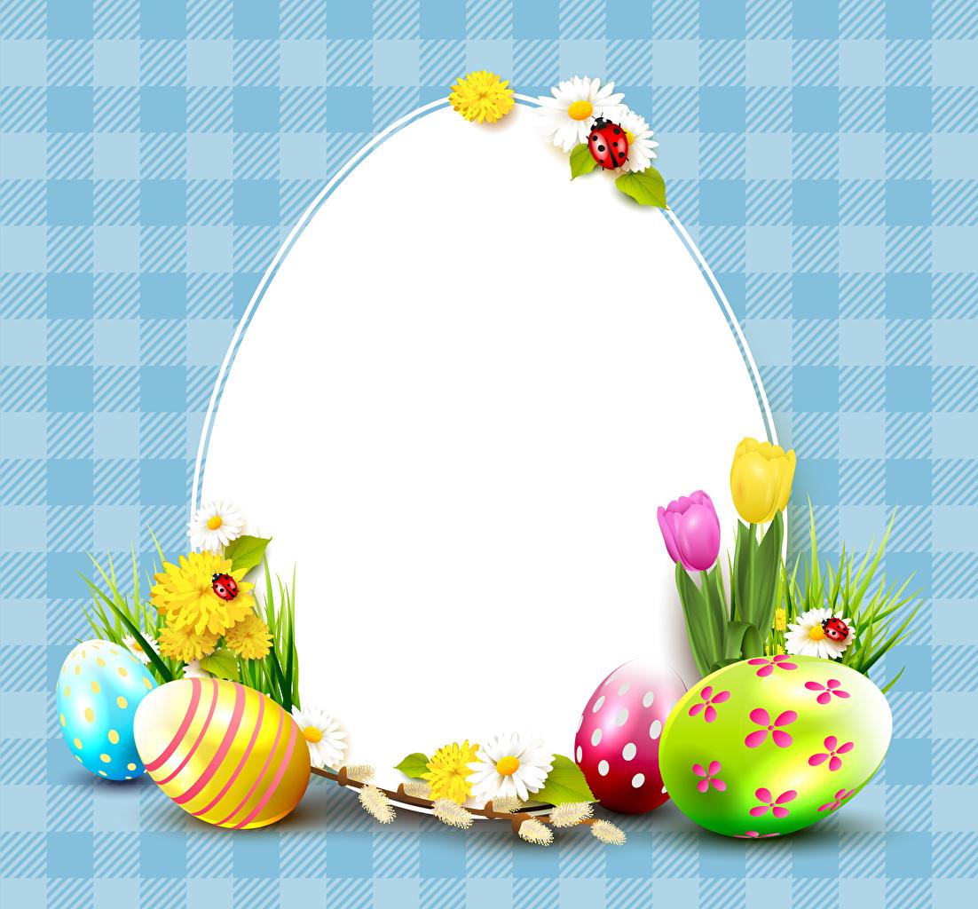 Фотографии Пасха Божьи коровки Яйца тюльпан цветок Ромашки Одуванчики Шаблон поздравительной открытки яиц яйцо яйцами Тюльпаны Цветы ромашка