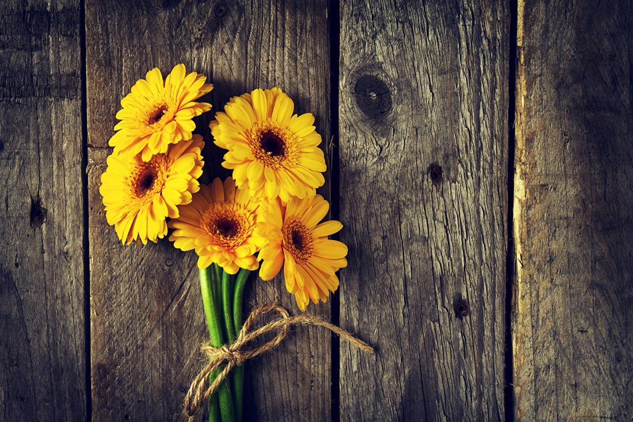 Картинки Желтый Герберы цветок Доски желтых желтые желтая гербера Цветы