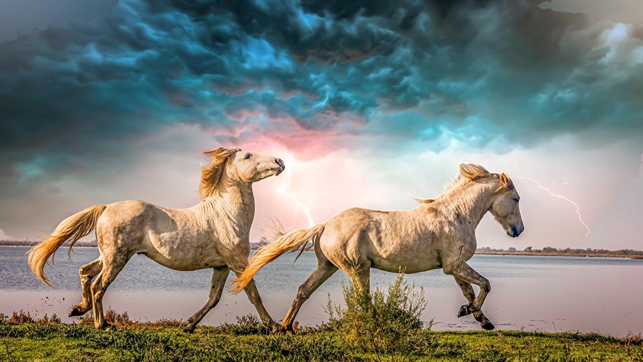Фотография лошадь Бег две Сбоку Животные Лошади бежит бегущая бегущий 2 два Двое вдвоем животное