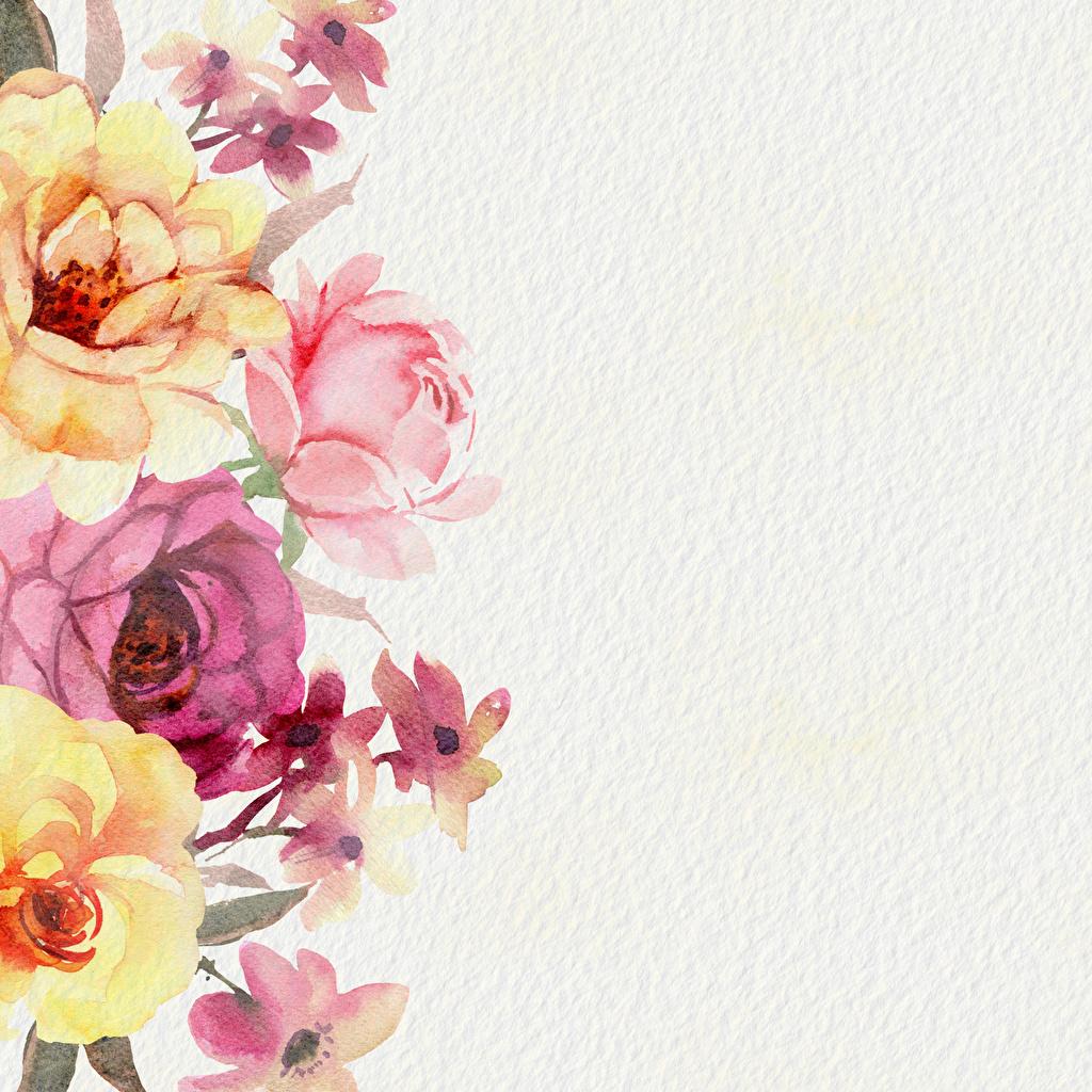 Фотографии Бумага роза Цветы Шаблон поздравительной открытки Рисованные бумаге бумаги Розы цветок