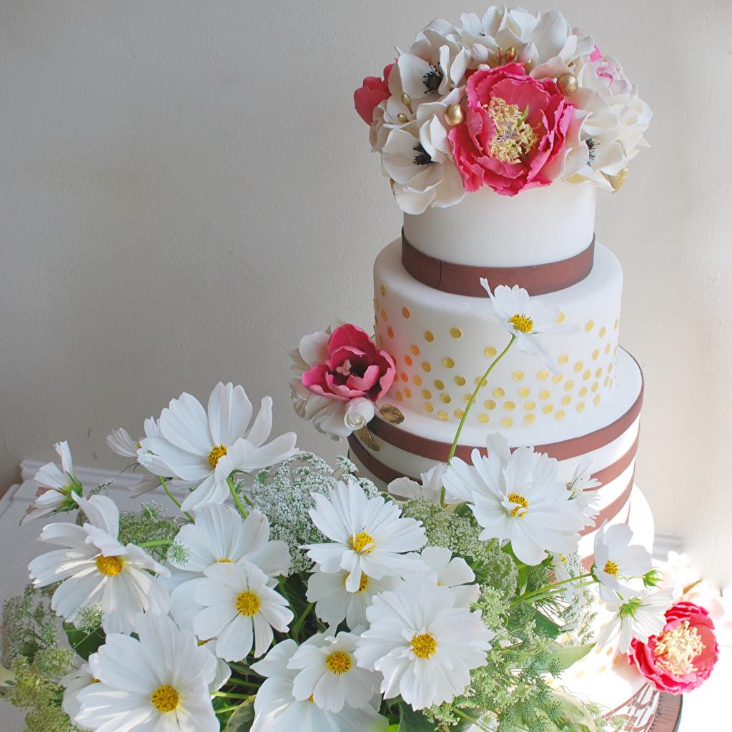 Фотография Торты цветок Космея Пища Анемоны Сладости дизайна Цветы Еда Ветреница Продукты питания сладкая еда Дизайн
