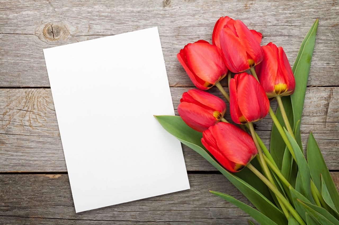 Обои Тюльпаны Цветы Шаблон поздравительной открытки Доски