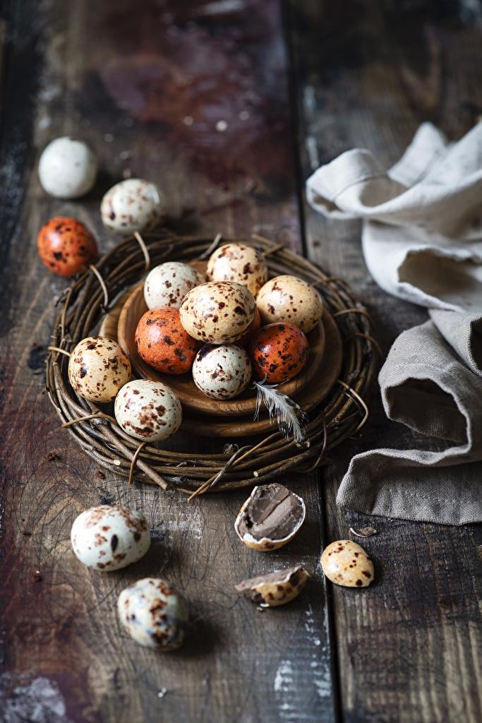 Фото Пасха яйцо гнезда Еда яиц Яйца яйцами гнезде Гнездо Пища Продукты питания