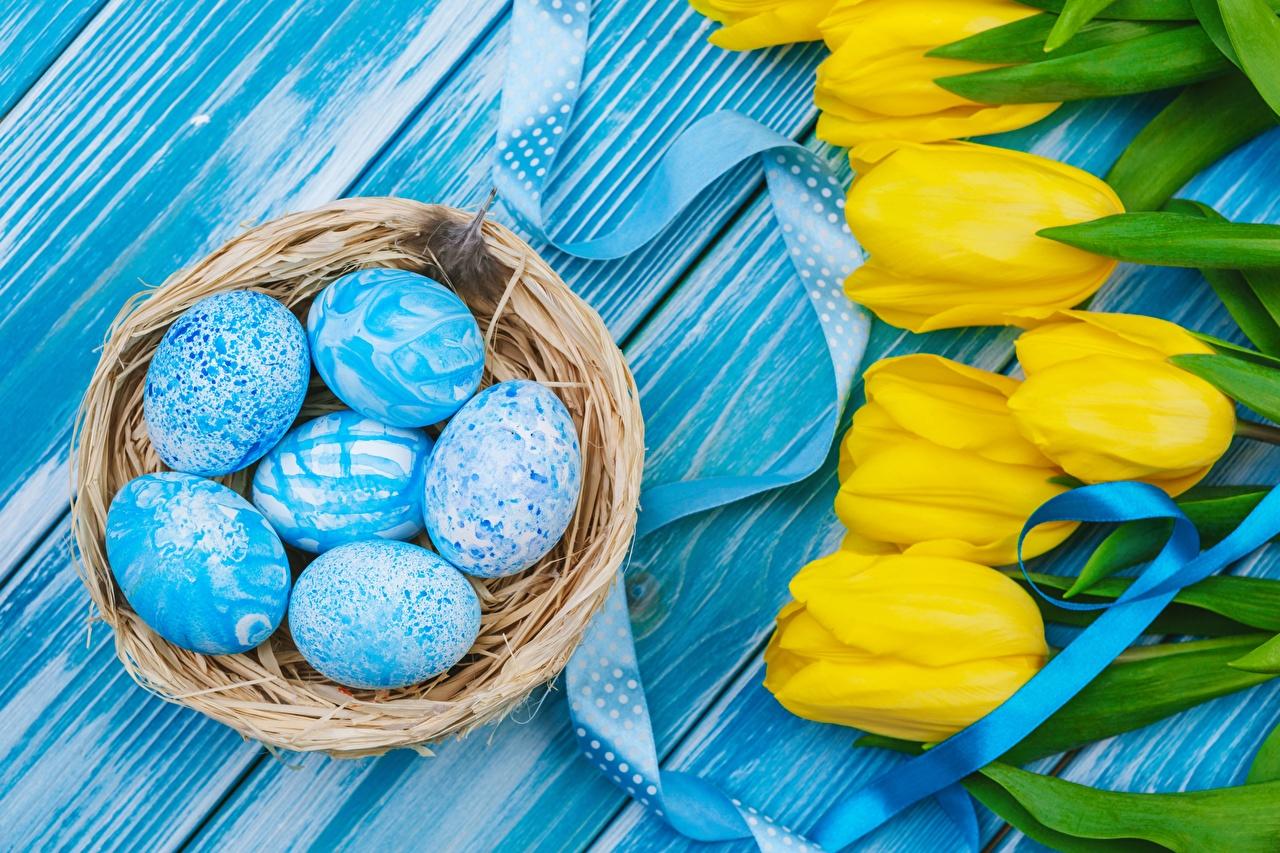 Обои для рабочего стола Пасха яйцами Гнездо тюльпан Цветы яиц яйцо Яйца гнезде гнезда Тюльпаны цветок