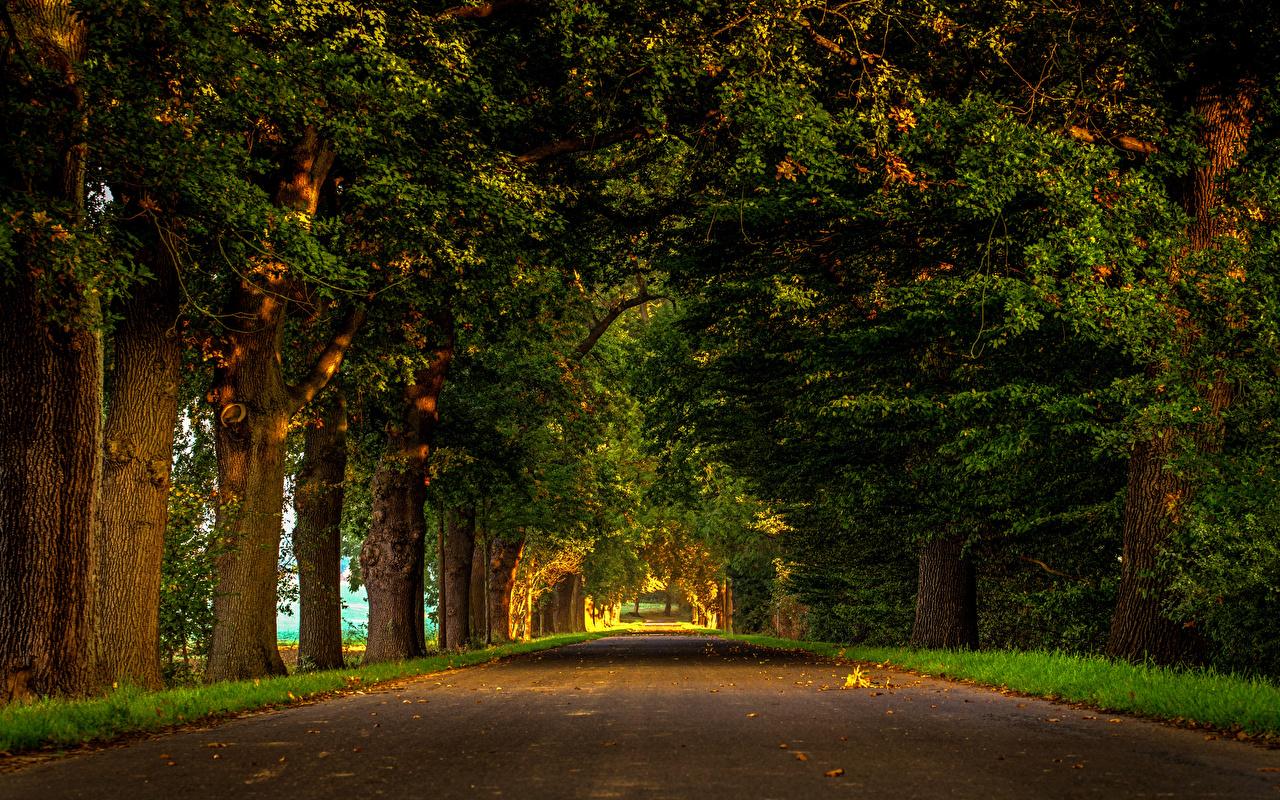 Фото Германия Lenne Аллея Природа Парки Деревья