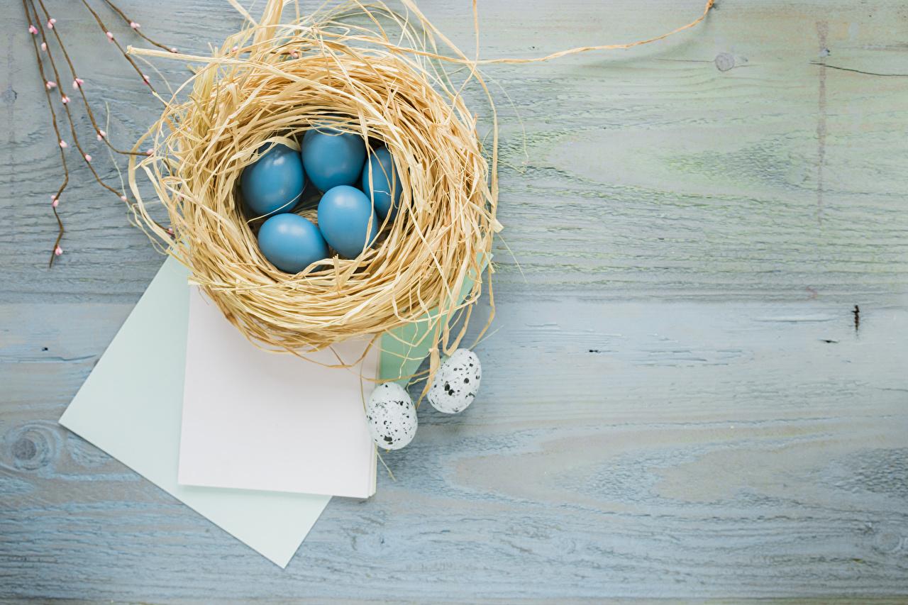 Картинки Пасха Лист бумаги яйцо гнезде яиц Яйца яйцами Гнездо гнезда