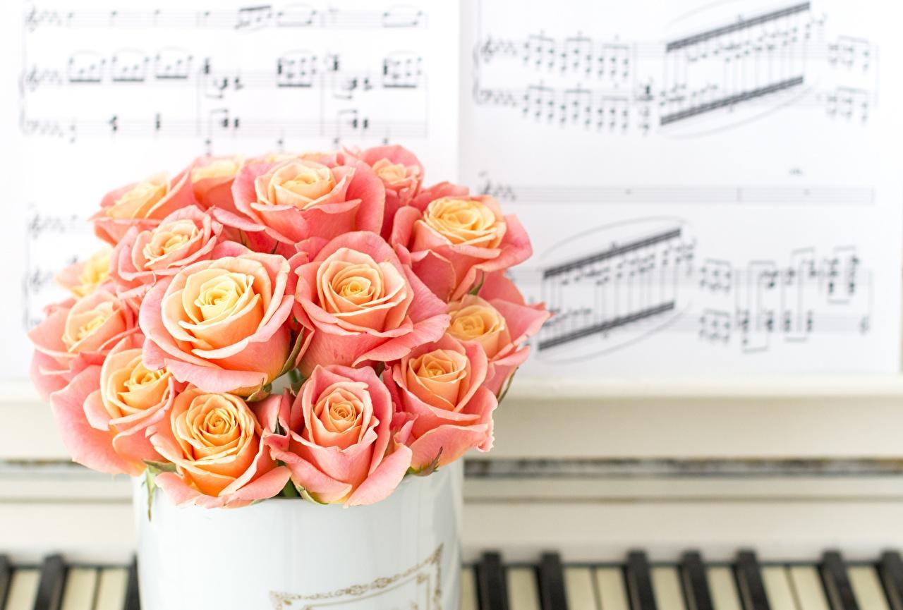 Фотография Ноты Букеты роза розовые Цветы букет Розы розовых розовая Розовый цветок