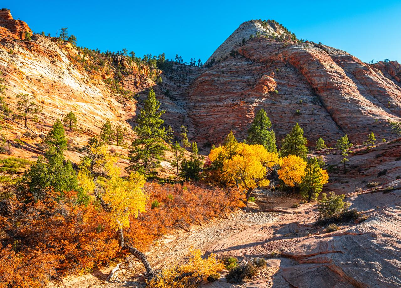 Фотография Зайон национальнай парк америка Utah Утес Горы осенние Природа парк США штаты гора Осень Скала скале скалы Парки