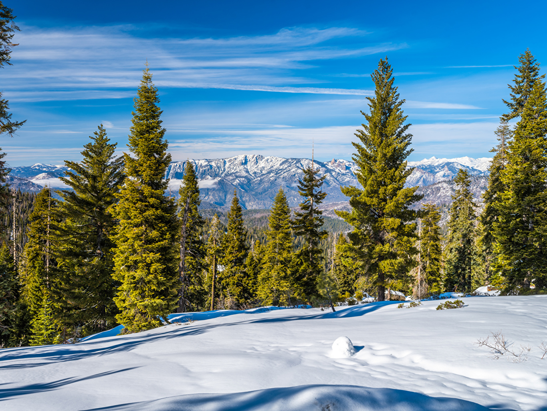 Картинки Калифорния штаты Kings Canyon National Park Природа парк снегу дерева калифорнии США америка Снег Парки снега снеге дерево Деревья деревьев
