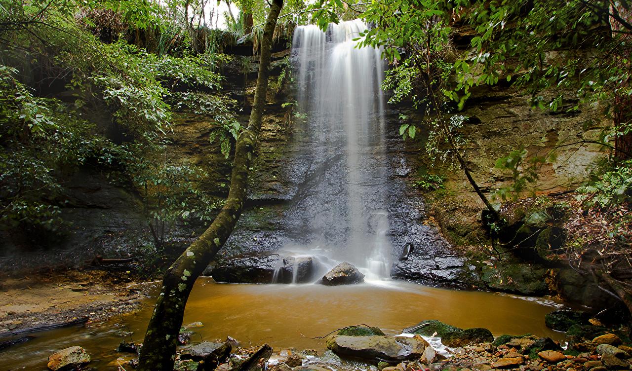 Картинки Австралия Morton National Park Утес Природа Водопады Ствол дерева Мох Камни скалы скале Скала мха мхом Камень