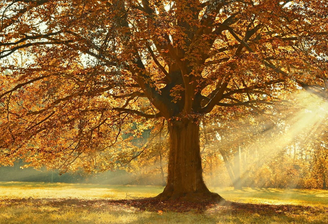 Фотографии Лучи света Linden Осень Природа ветвь деревьев осенние Ветки ветка на ветке дерево дерева Деревья