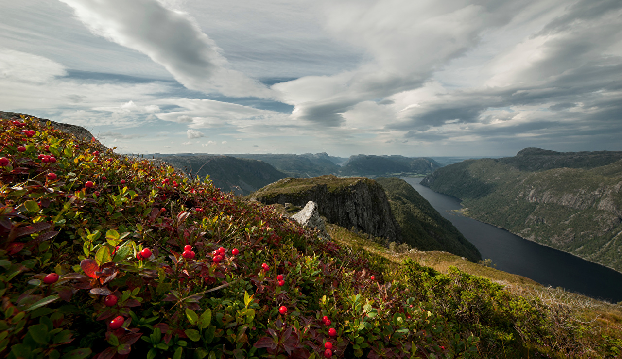 Обои для рабочего стола Норвегия Rogaland Горы Природа Пейзаж Ягоды облако гора Облака облачно