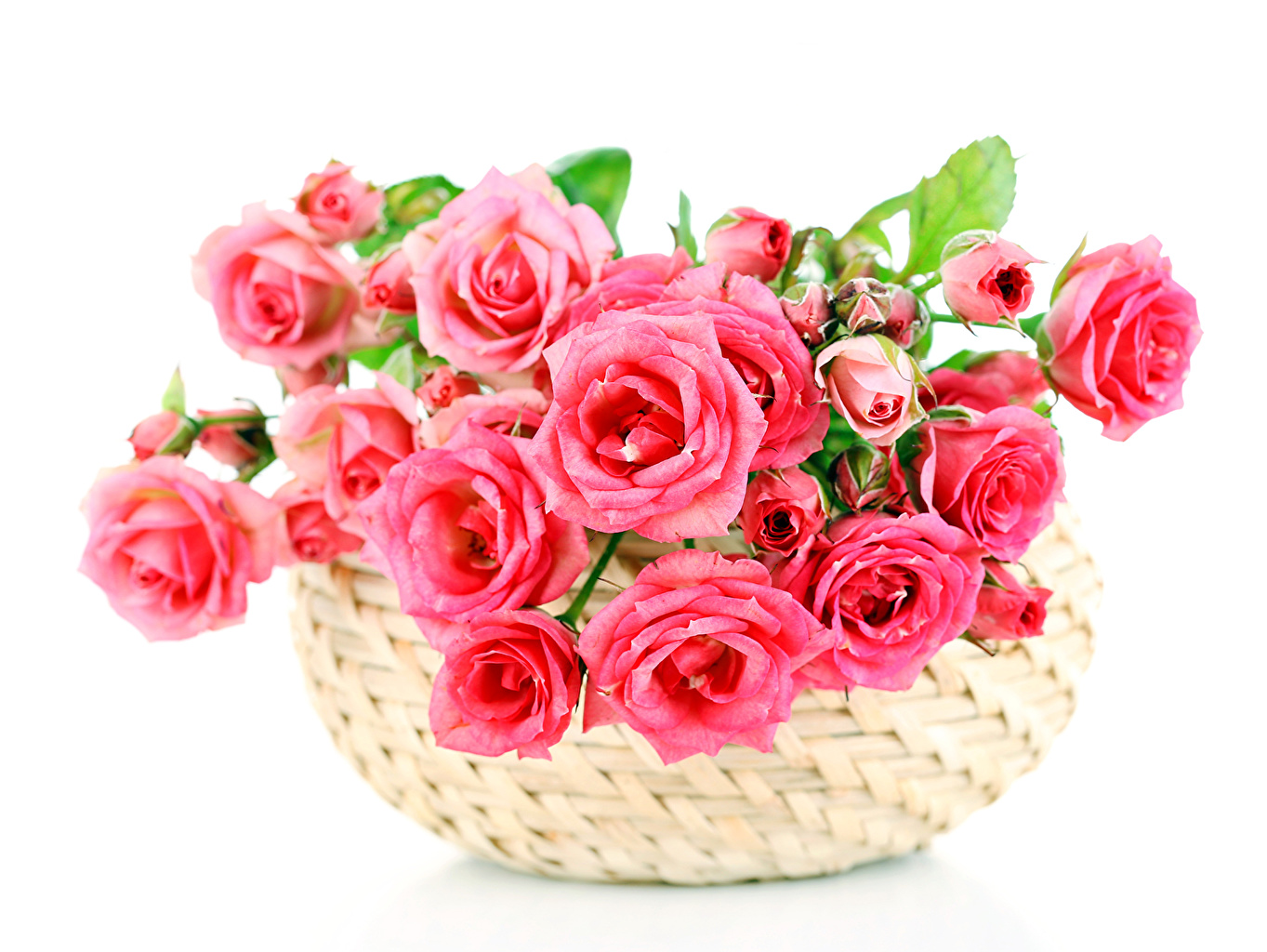 Фотография Розы розовая цветок Корзина Много Бутон роза Розовый розовые розовых Цветы корзины Корзинка