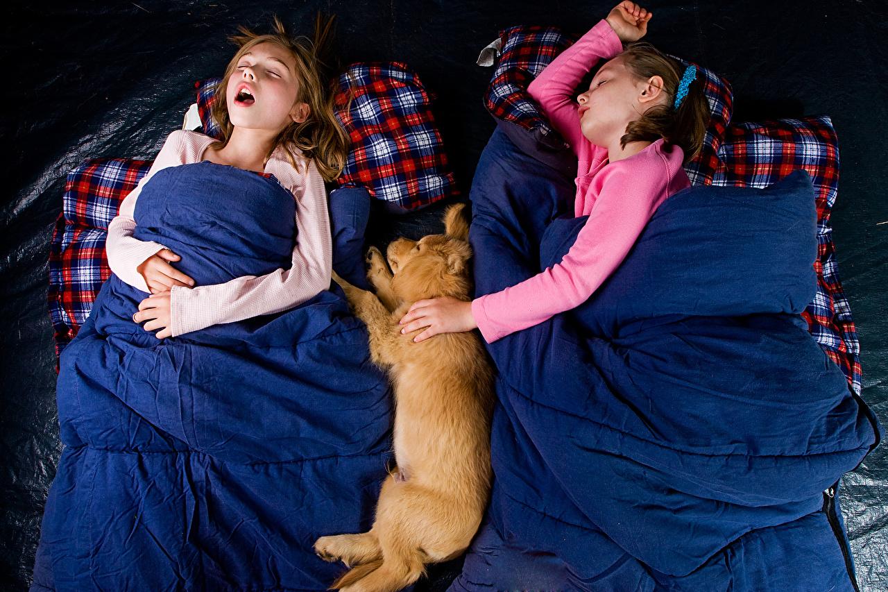 Фотографии Девочки Собаки Ребёнок спящий Дети сон Спит