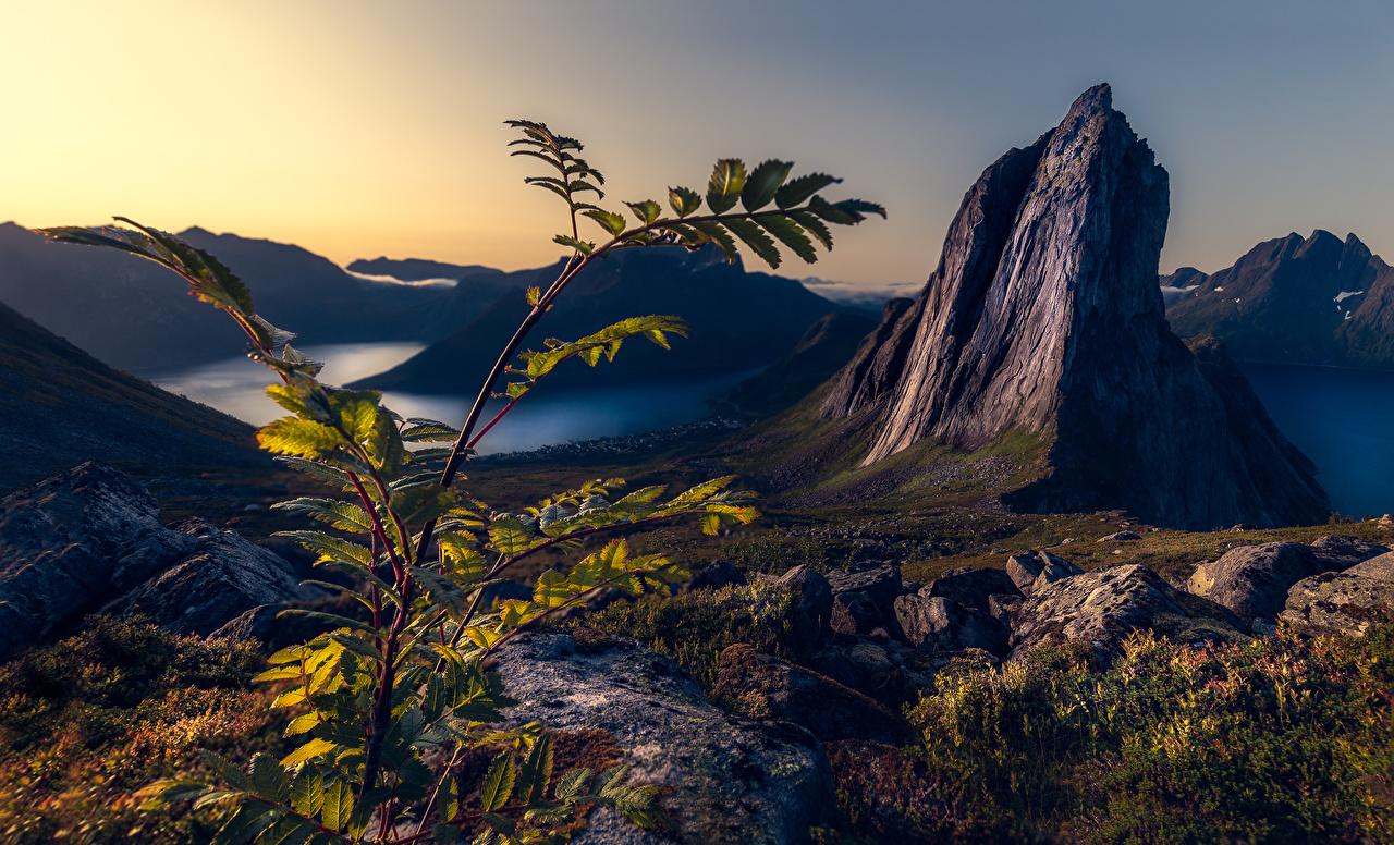 Обои для рабочего стола Норвегия Segla, Troms Горы Скала Каньон Природа ветка гора Утес скале скалы каньона каньоны ветвь Ветки на ветке