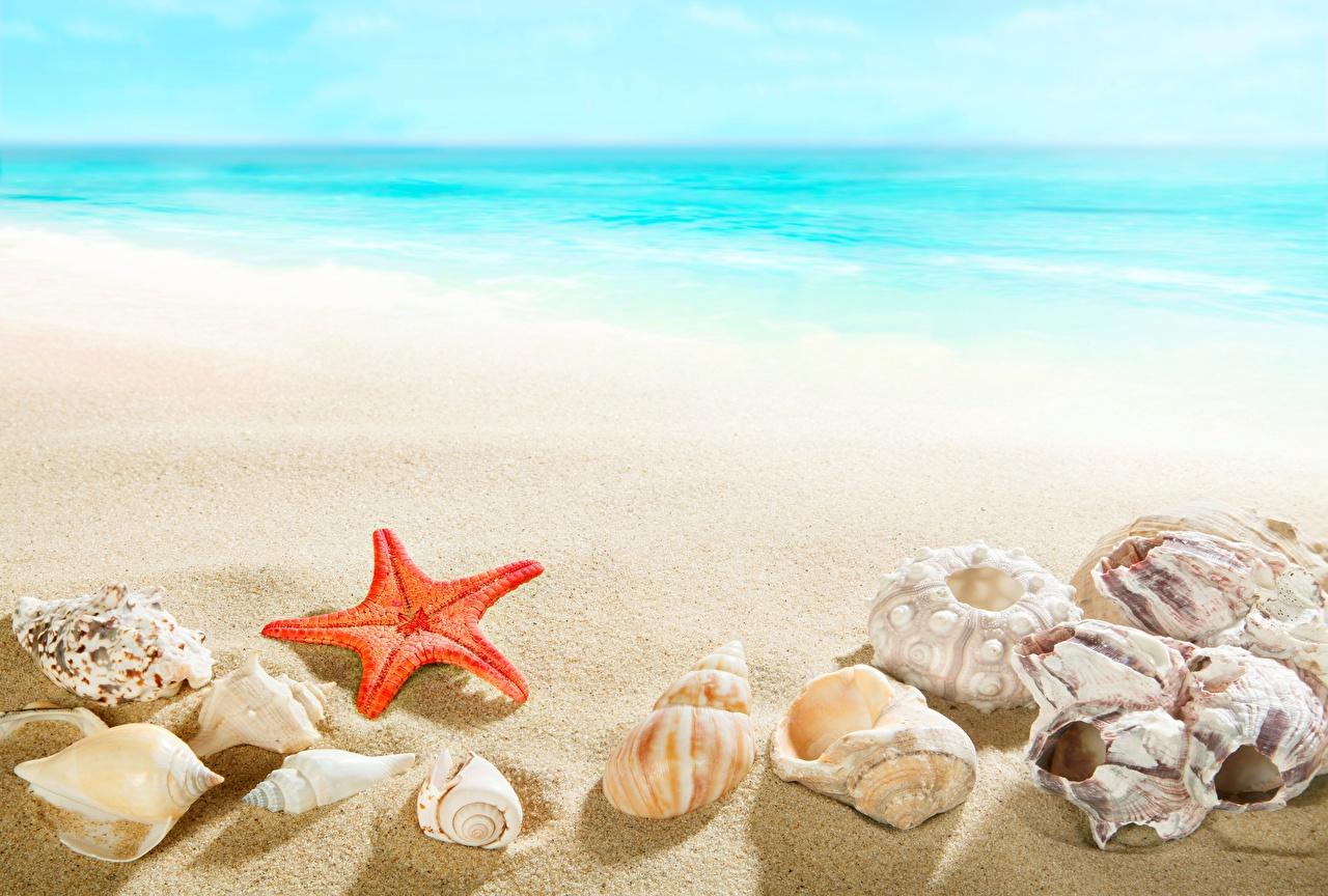 Звезды пляж топлесс