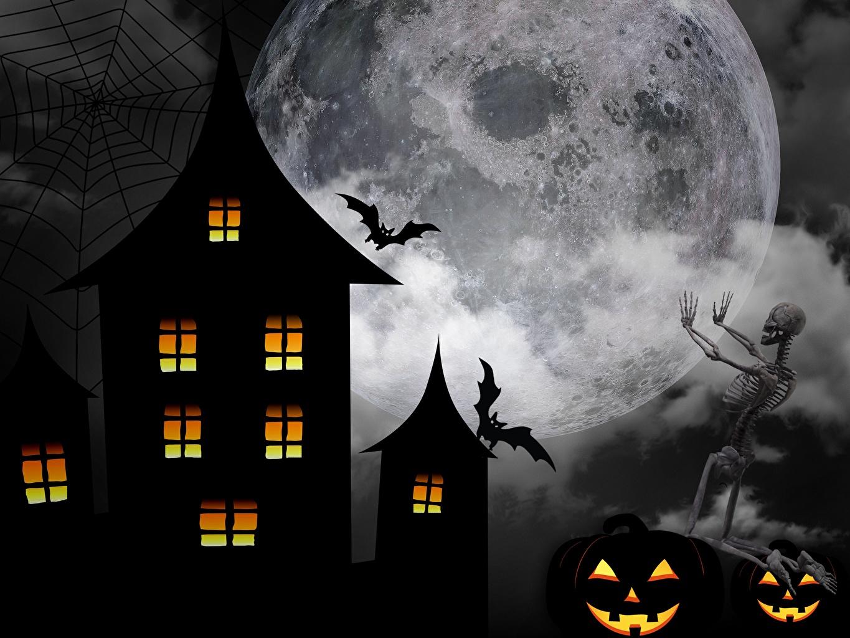 Фотографии Летучие мыши хэллоуин скелета луной Хеллоуин Скелет скелеты скелетов Луна луны