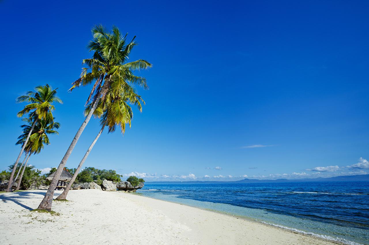 Фото Филиппины Пляж Природа Песок Пальмы Тропики Побережье берег