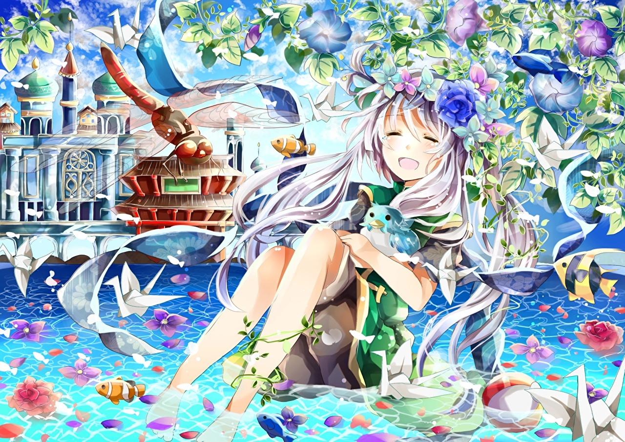Фото Стрекозы Аниме Лепестки молодые женщины Пруд Ноги Цветы девушка Девушки лепестков молодая женщина ног цветок