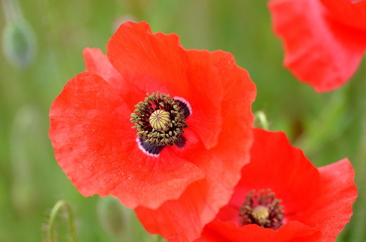 Фото крупным планом цветы