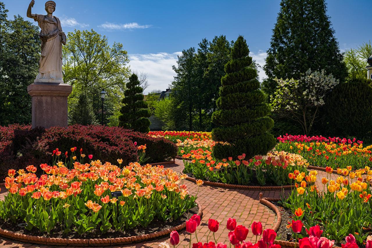 Фотография США Памятники Victorian Garden in the Missouri Botanical Garden Ель Весна тюльпан Природа Сады дизайна штаты америка ели Тюльпаны весенние Дизайн