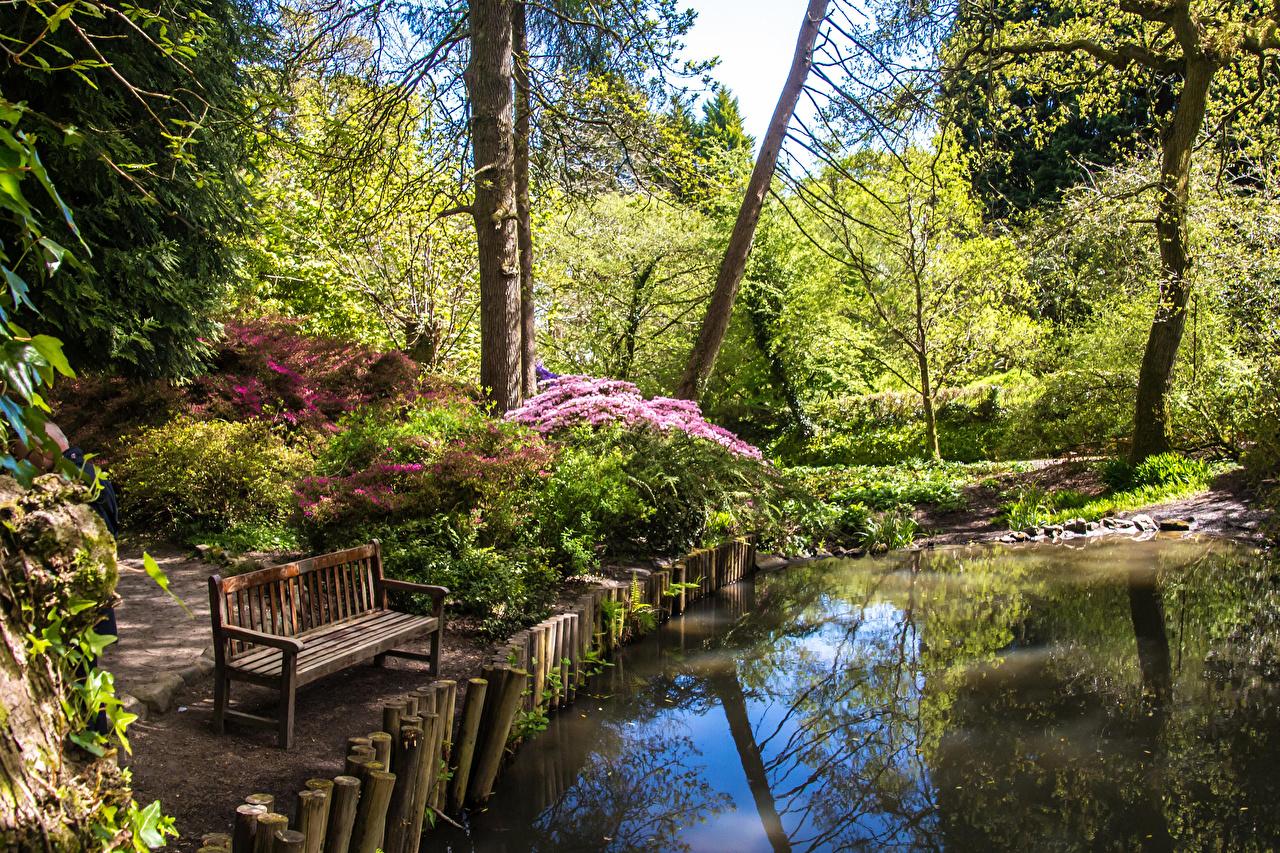 Фотография Великобритания Clyne Gardens Swansea Природа Пруд Парки Скамья Кусты дерево парк Скамейка кустов дерева Деревья деревьев