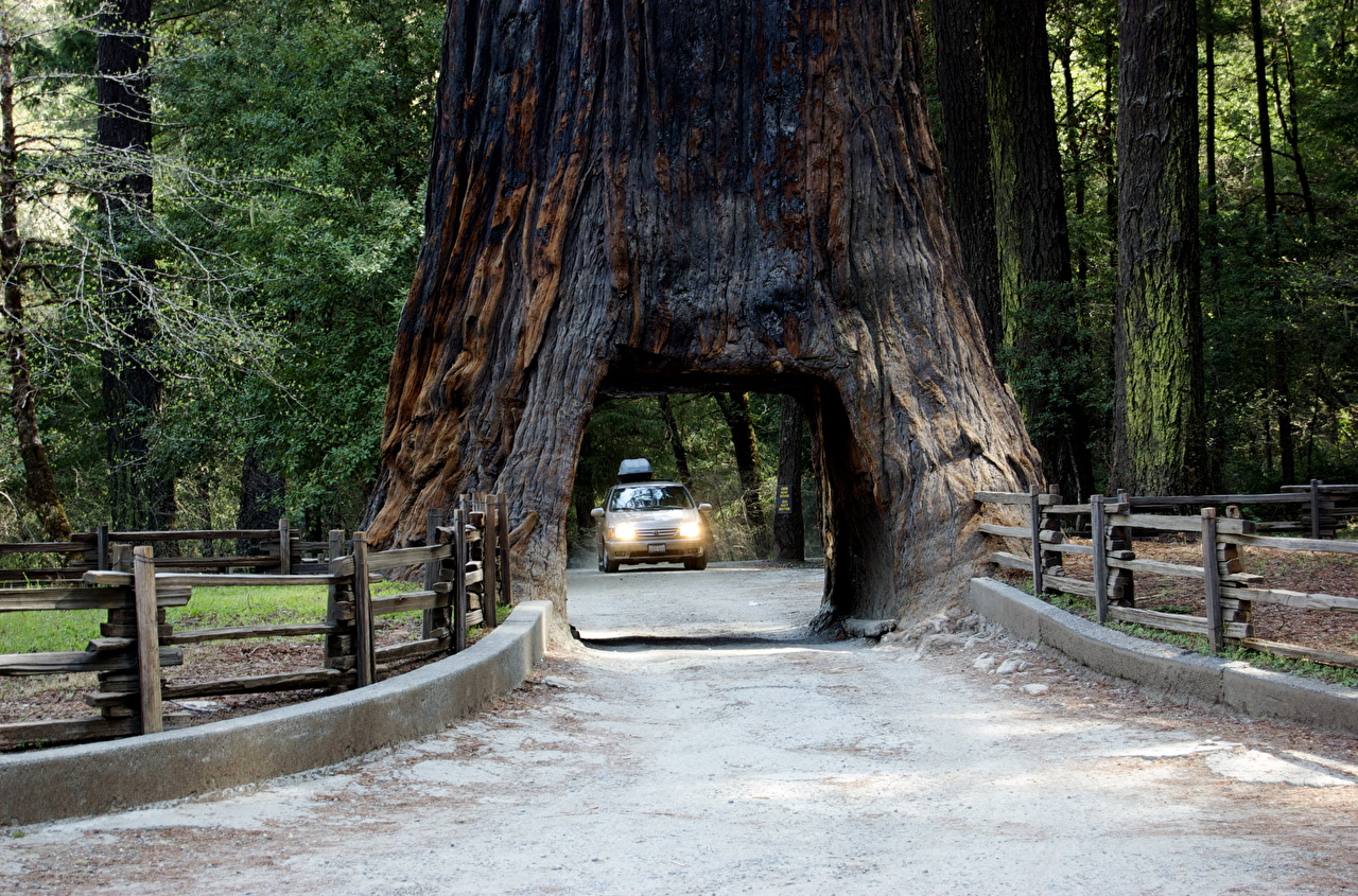 Фотографии Калифорния штаты Арка Sierra Nevada, Sequoia National Park Природа парк Дороги дерева калифорнии США америка арки Парки дерево Деревья деревьев