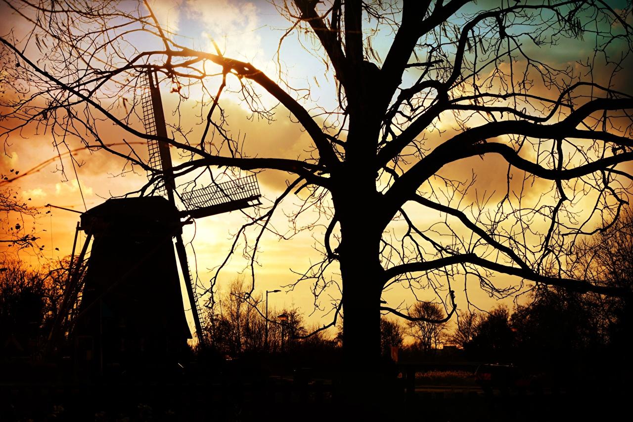 Фотография ветряная мельница силуэта Природа ветвь дерево Мельница мельницы Силуэт силуэты Ветки ветка на ветке дерева Деревья деревьев