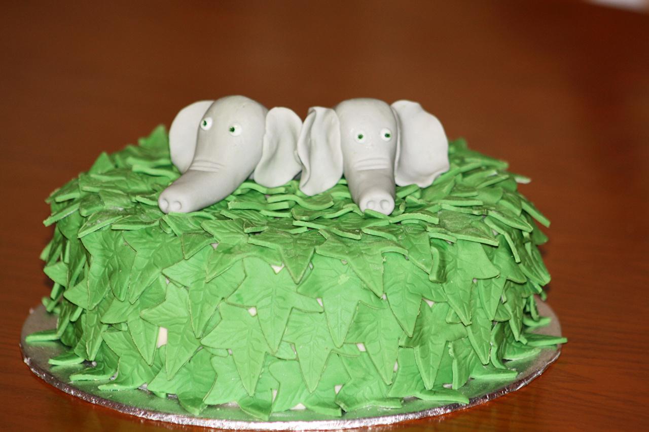 Фотографии Слоны Торты Еда Сладости Дизайн Цветной фон Пища Продукты питания дизайна