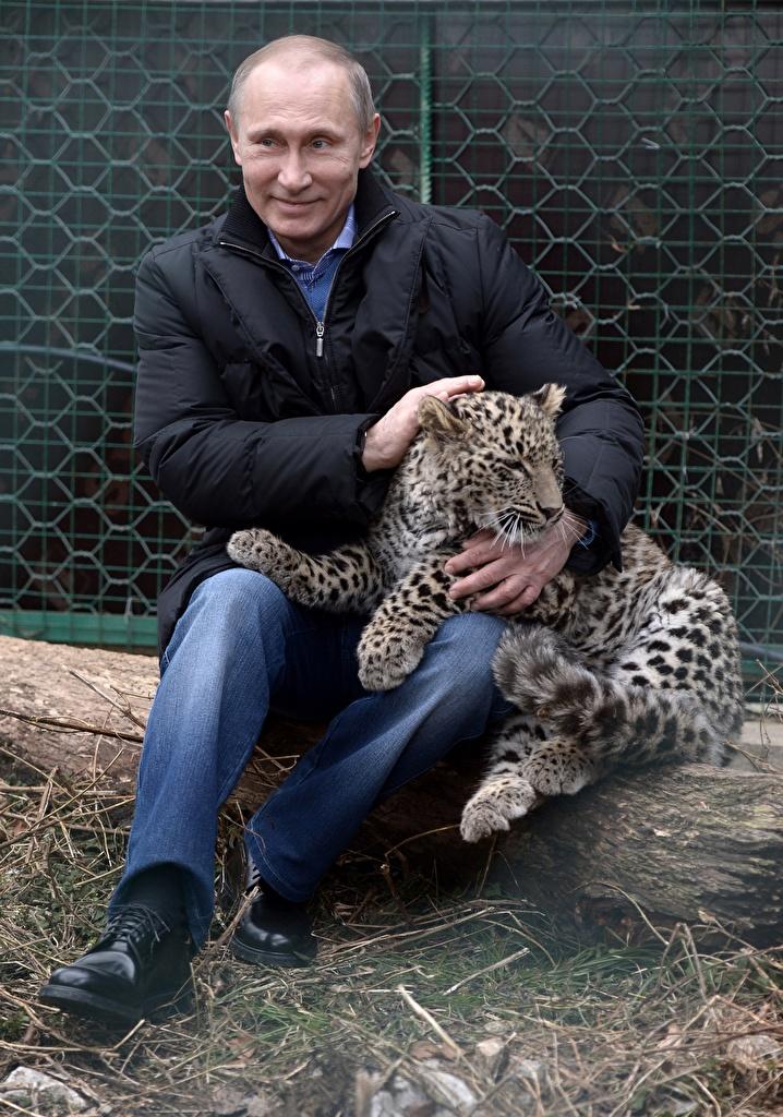 Фотография Владимир Путин Леопарды Мужчины Знаменитости