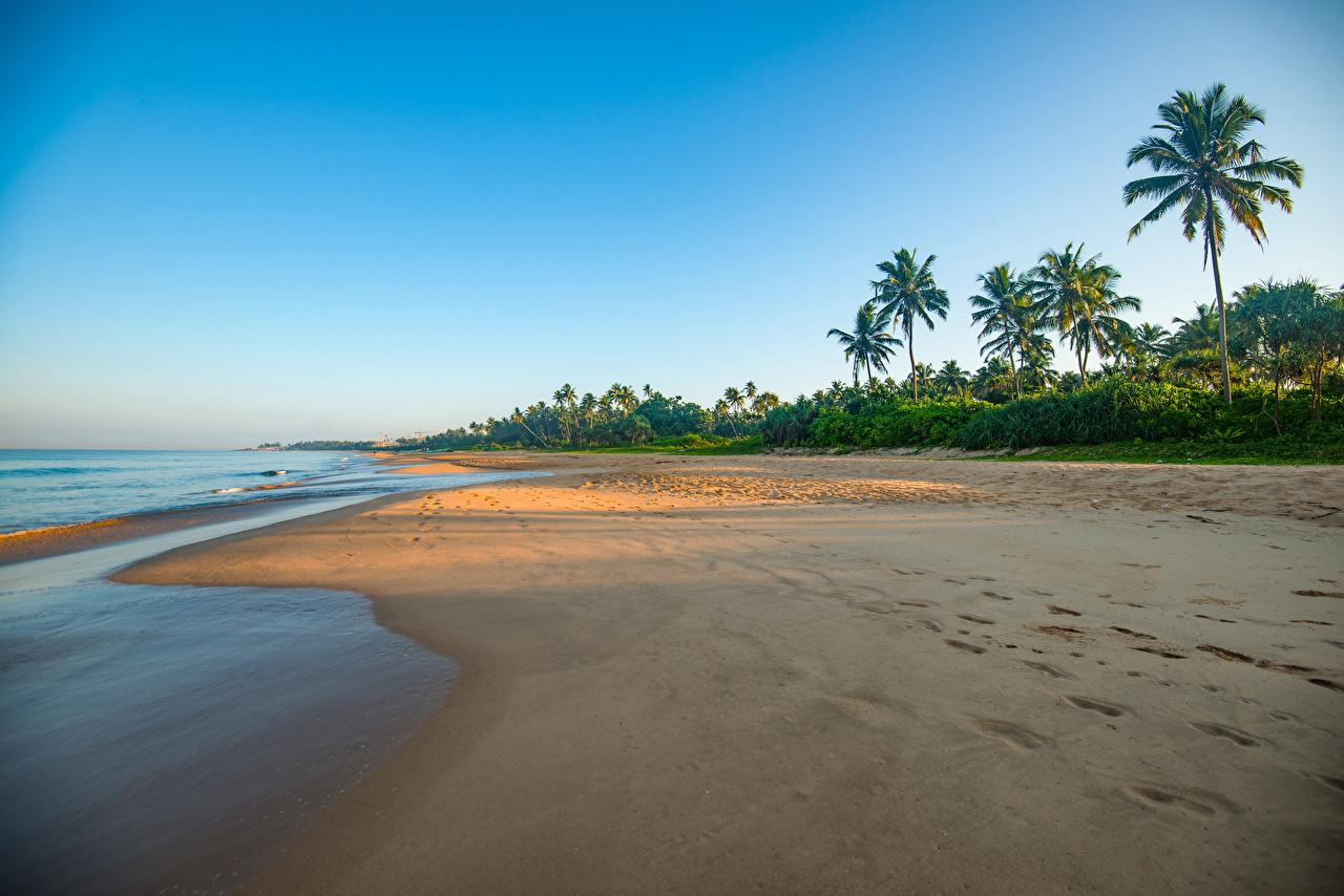 Фотография Шри-Ланка Bentota Beach пляжи Море Природа пальма берег Пляж пляжа пляже пальм Пальмы Побережье