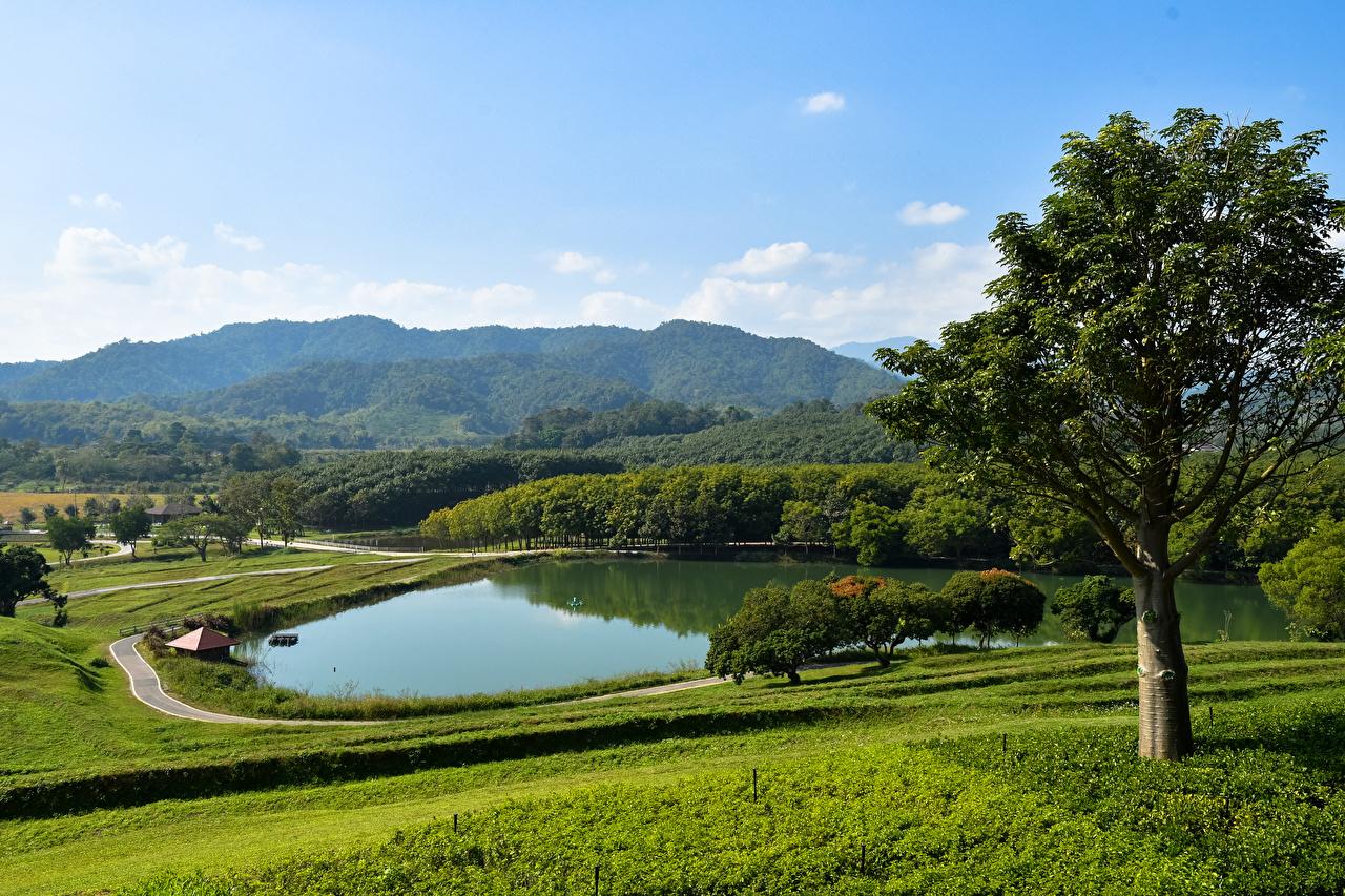 Фотографии Таиланд Chiang Rai Природа Озеро Парки Тропики Трава Деревья