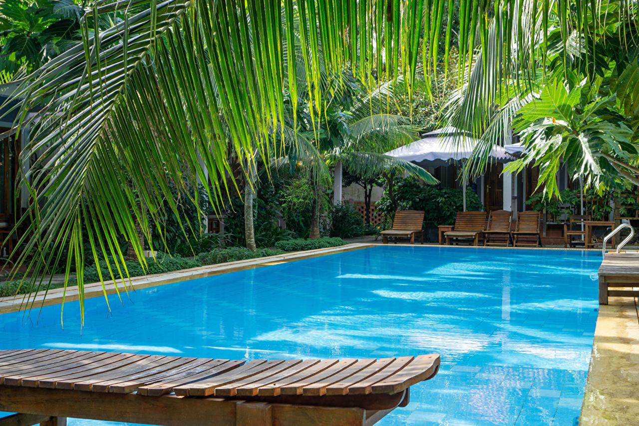 Фото Вьетнам Курорты Бассейны Phu Quoc Island Природа Пальмы Ветки Плавательный бассейн пальм пальма ветвь ветка на ветке