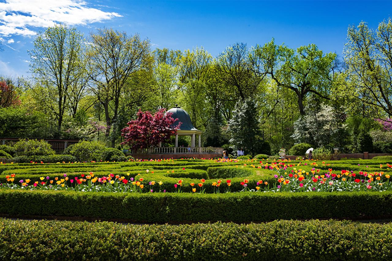 Фото америка Missouri Botanical Garden Природа тюльпан весенние Сады кустов дерева США штаты Весна Тюльпаны Кусты дерево Деревья деревьев
