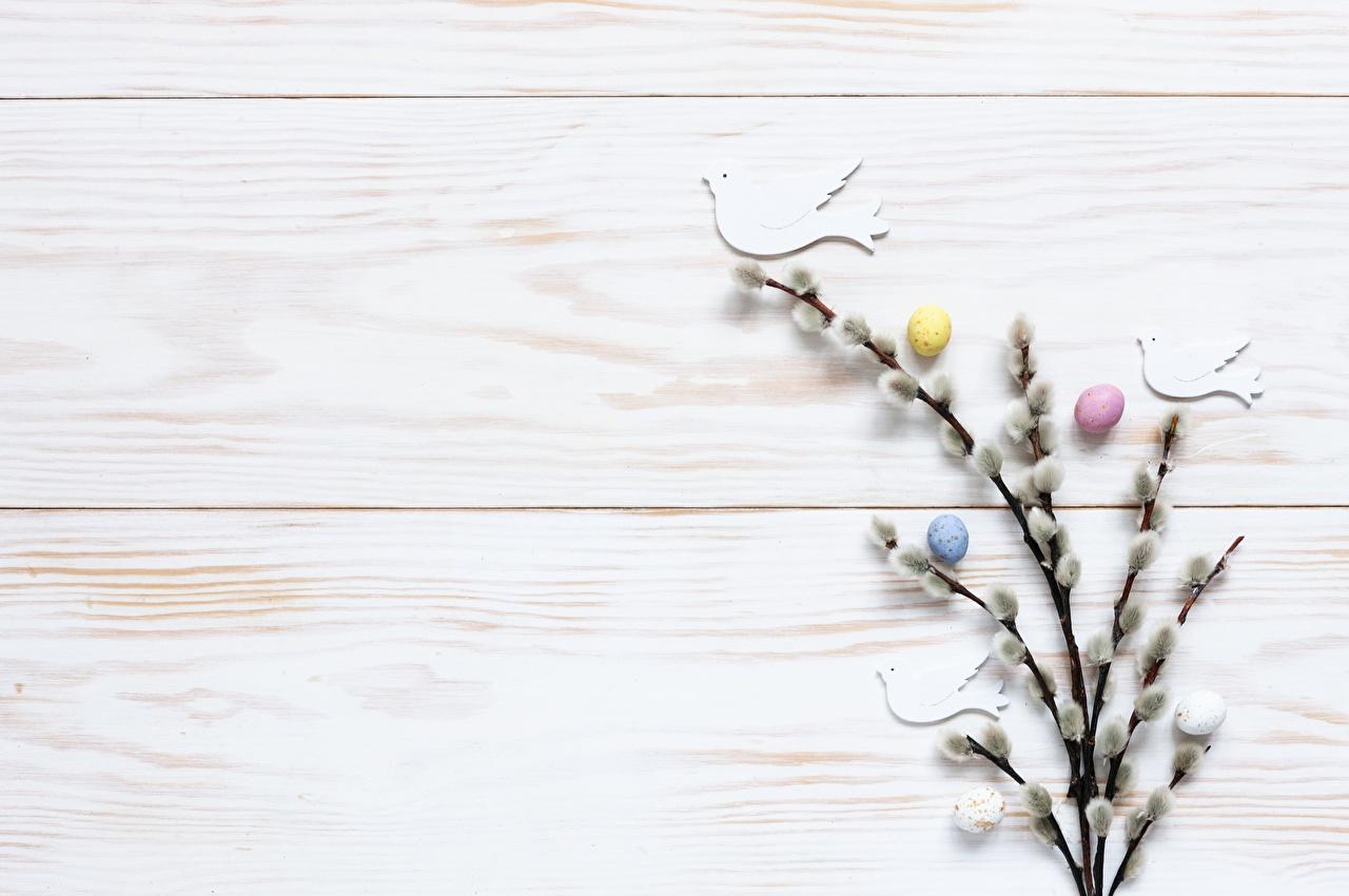 Фотография Пасха verba Яйца Ветки яиц яйцо яйцами ветвь ветка на ветке