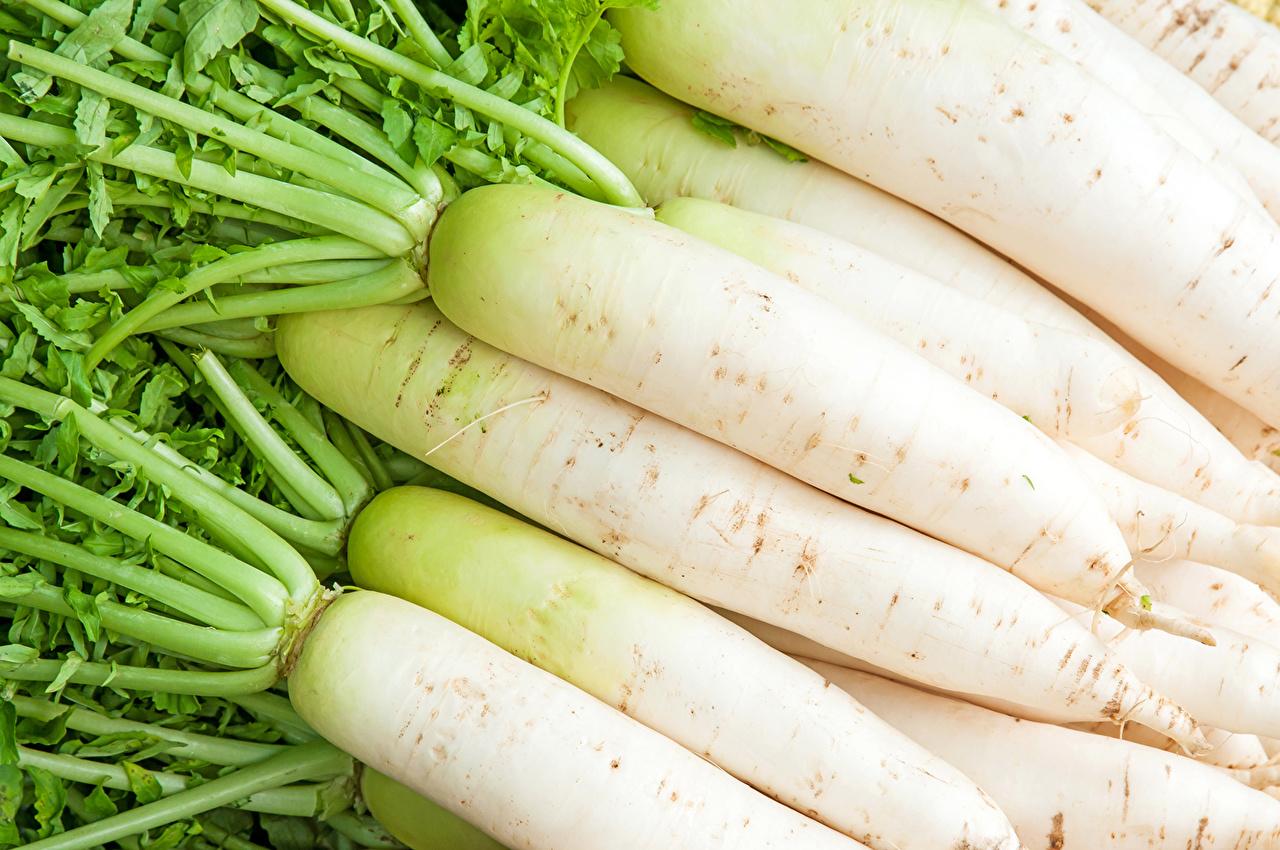 Фотография Редис белая Пища Овощи Белый белые белых Еда Продукты питания